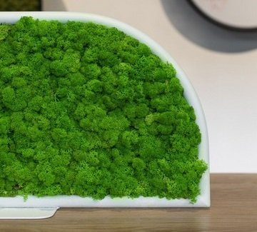Cloison acoustique végétale MOSS
