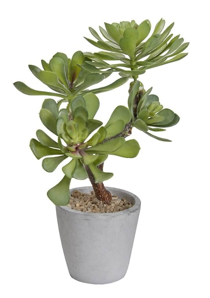Petite plante déco à poser sur le bureau